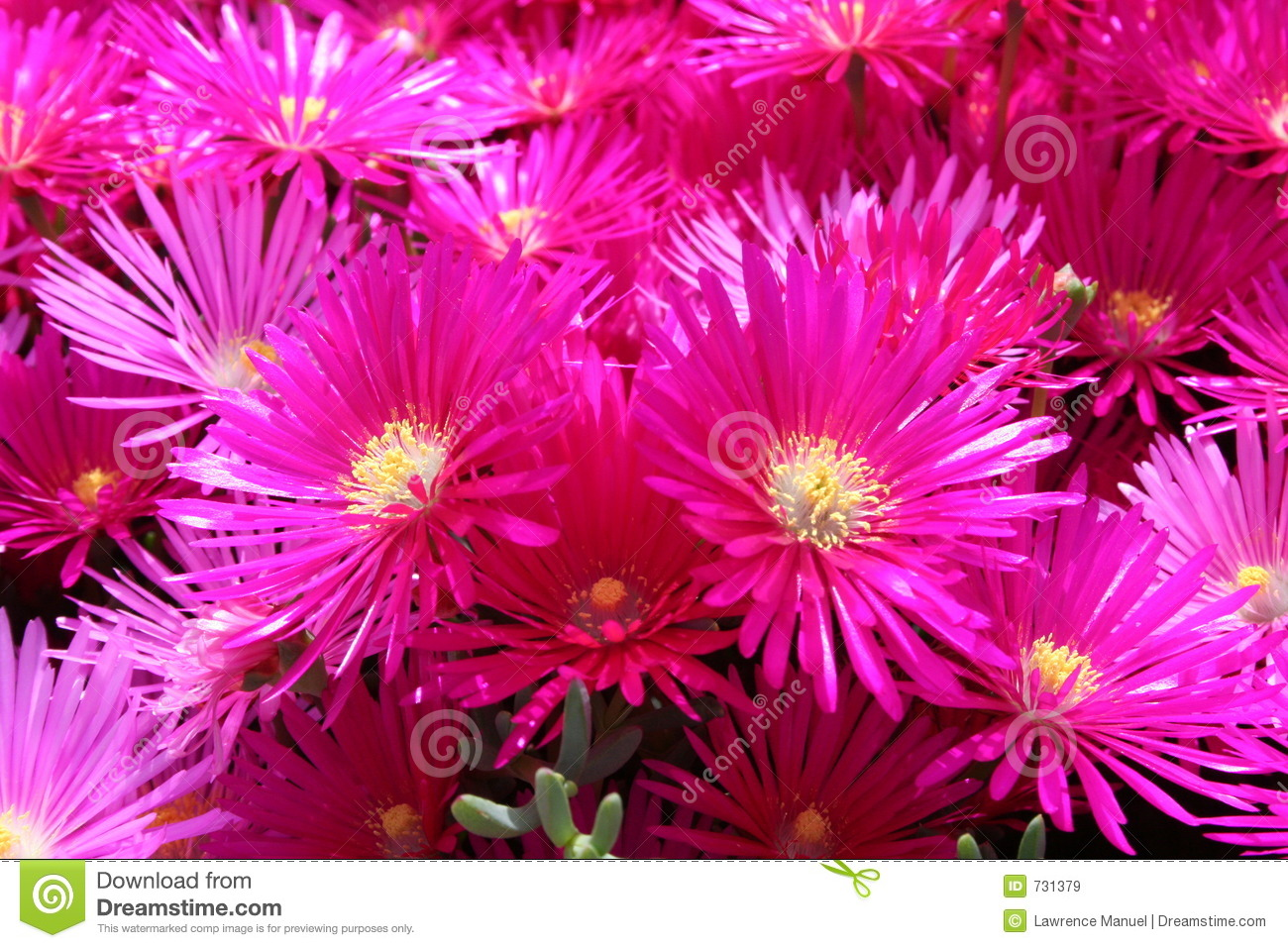 Beautiful Girl Pictures Wallpaper Bright Colored Flowers Stock Image Image Of Lawrence