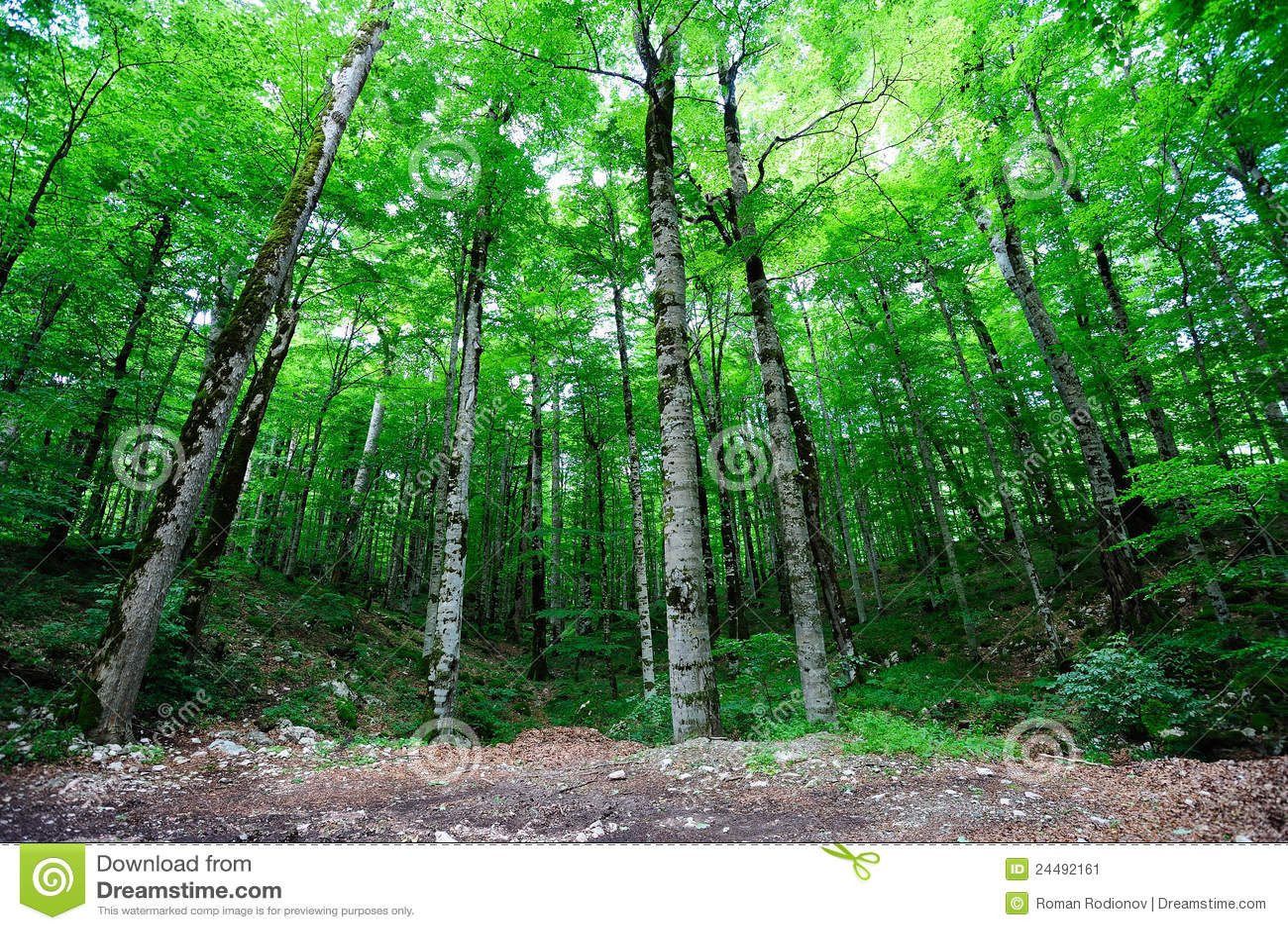 Fall Coastal Desktop Wallpaper Bright Green Forest Stock Image Image 24492161