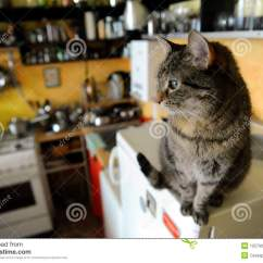 Cats In The Kitchen 60 Island Brindle Cat Stock Photo Image Of Counter