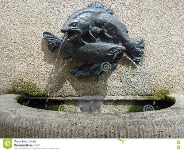 Small Water Fountain with Fish