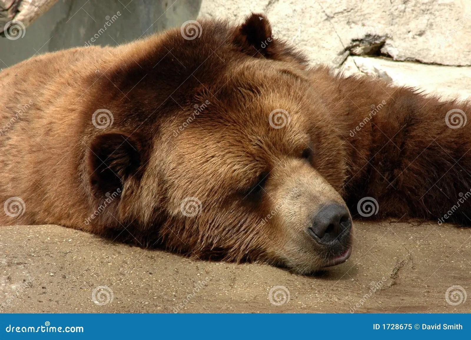 Brown Bear Sleeping At Zoo Royalty Free Stock Photo