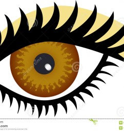 brown eye stock illustrations 11 045 brown eye stock illustrations vectors clipart dreamstime [ 1300 x 888 Pixel ]