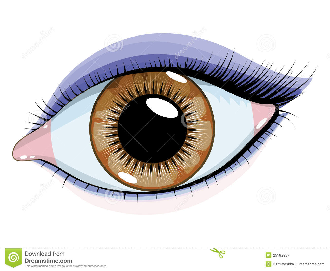 hight resolution of brown eyes with makeup on a white background