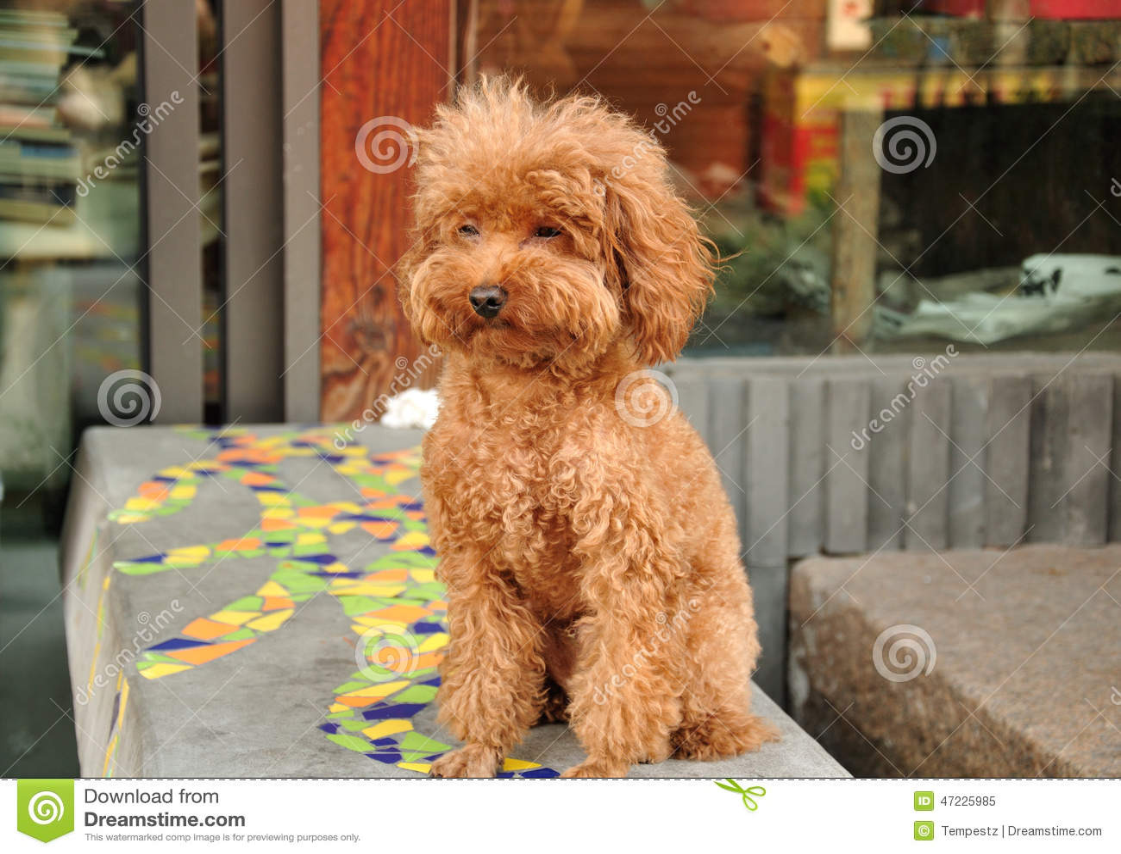 Brown Furry Dog Stock Photo Image 47225985