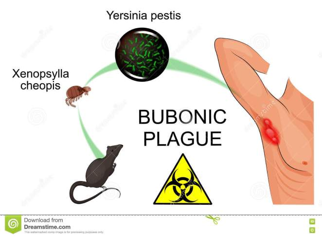 Image result for BUBONIC PLAGUE