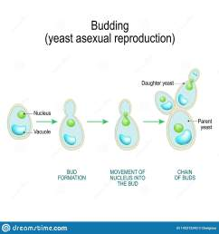 fungi diagram gcse [ 1600 x 1689 Pixel ]