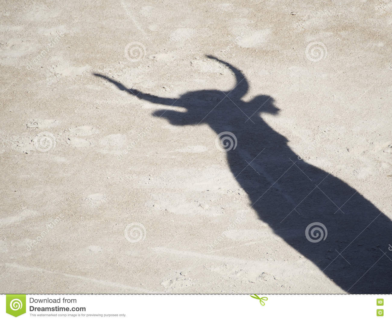 Bull Shadow Stock Photo Image Of Celebration Cattle
