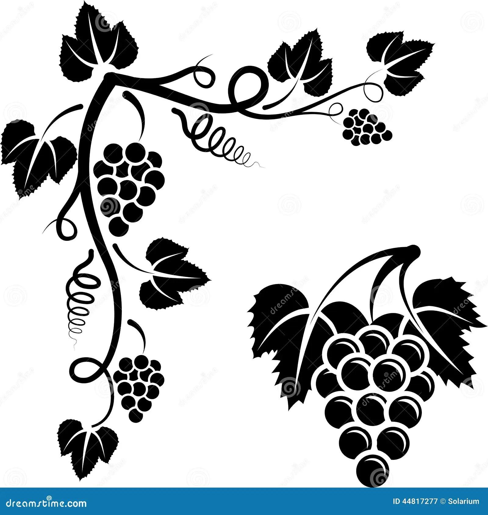 Bunch Of Vine Stock Vector Illustration Of Vine Ornament