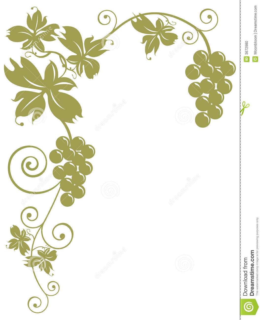 Bunches Of Grapes And Leaves Stock Vector  Illustration
