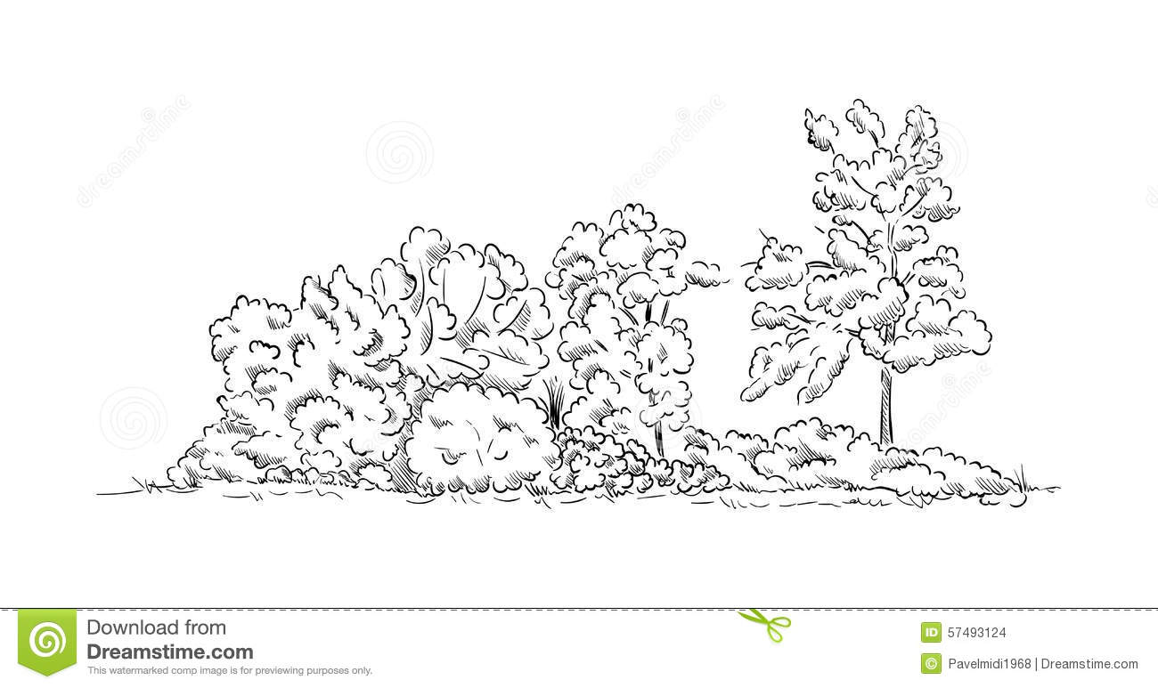 Bushes and trees stock vector. Image of striped, foliage