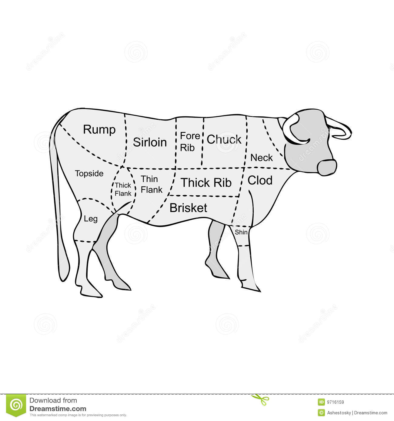 Butcher Meat Sections Of Cow Stock Vector
