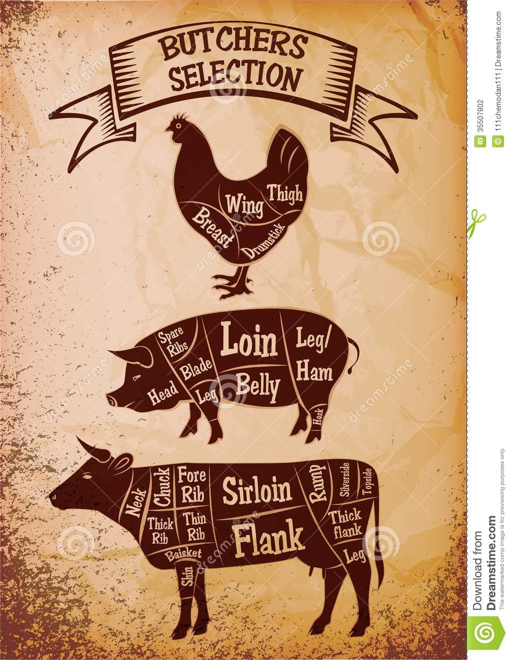 cow meat diagram 1990 crx radio wiring butchers selection stock vector. illustration of beef - 35507802