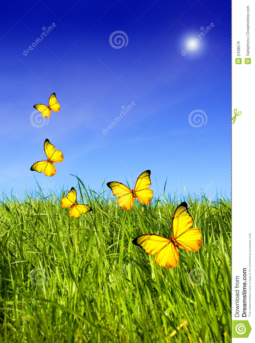 Animal Rights Wallpaper Butterflies Over Grass Stock Photo Image Of Butterflies