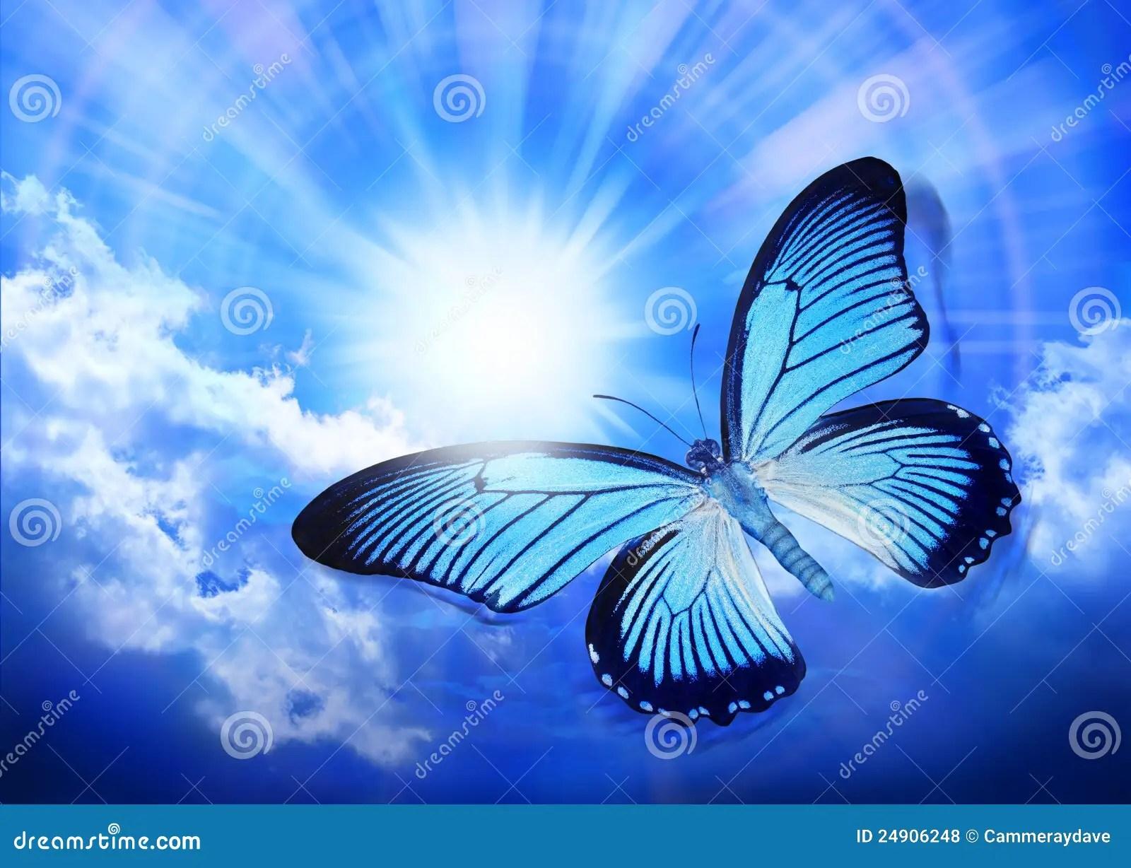 butterfly blue sky sun