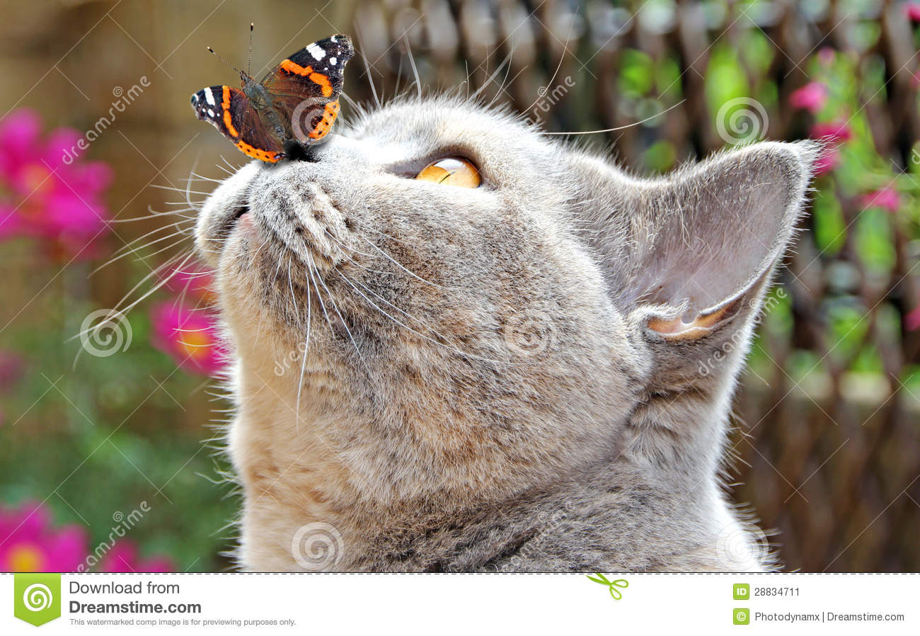 Www Animation Wallpaper Com Butterfly Lands On Nose Of Cat Stock Image Image 28834711