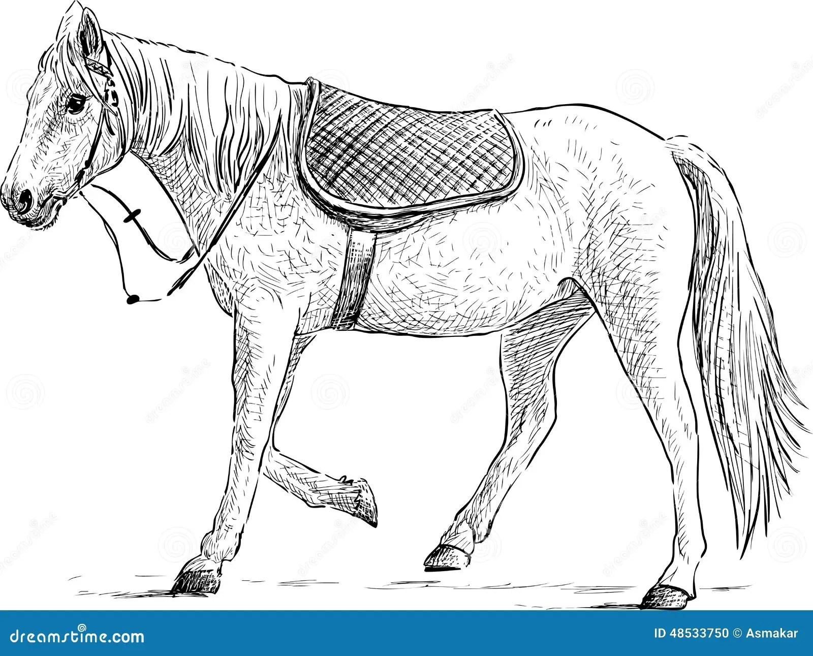 Caballo Ensillado Ilustracion Del Vector Ilustracion De