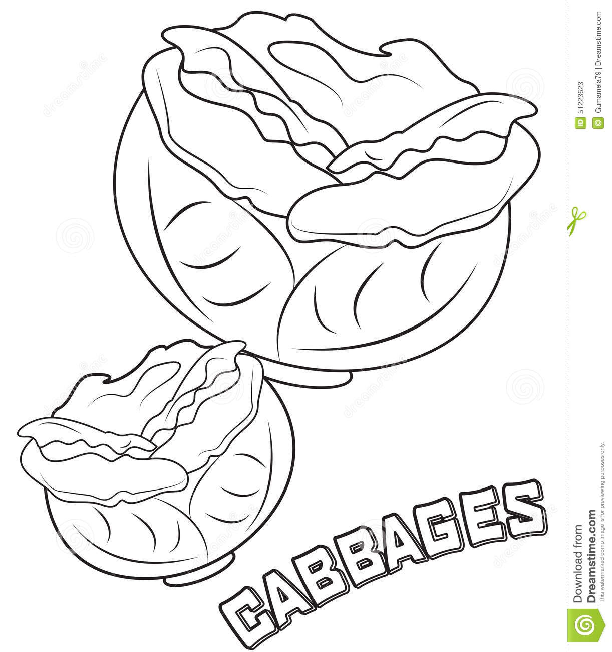 Cabbage Coloring Page Stock Illustration Illustration Of