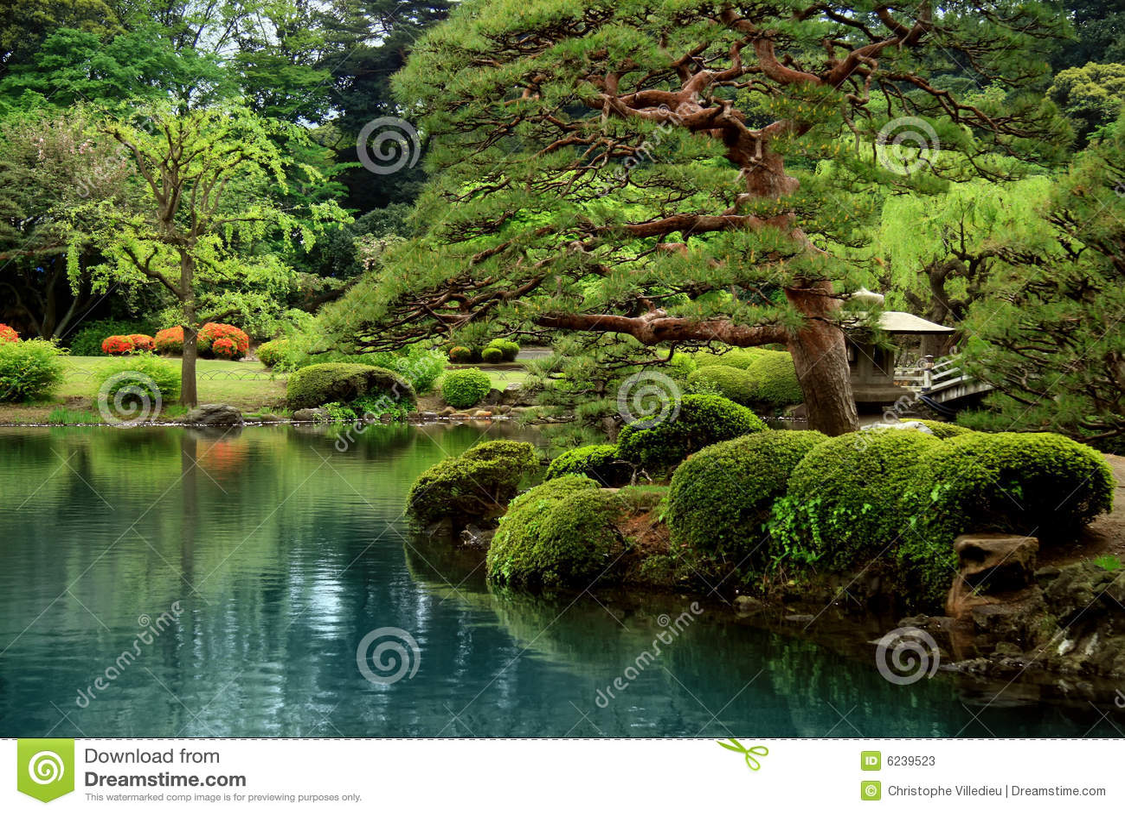 Calm Zen Lake And Bonzai Trees Stock Image  Image of
