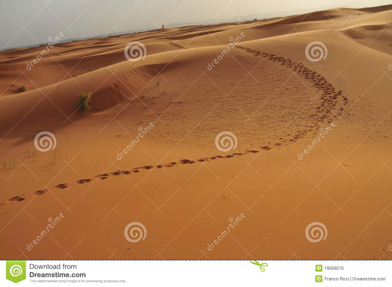 Camel Footprint On The Dunes In The Desert Editorial Image