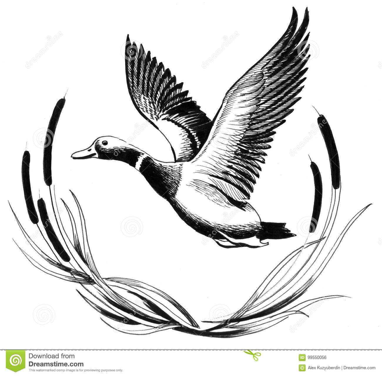 Canard De Vol Illustration Stock Illustration Du Modele