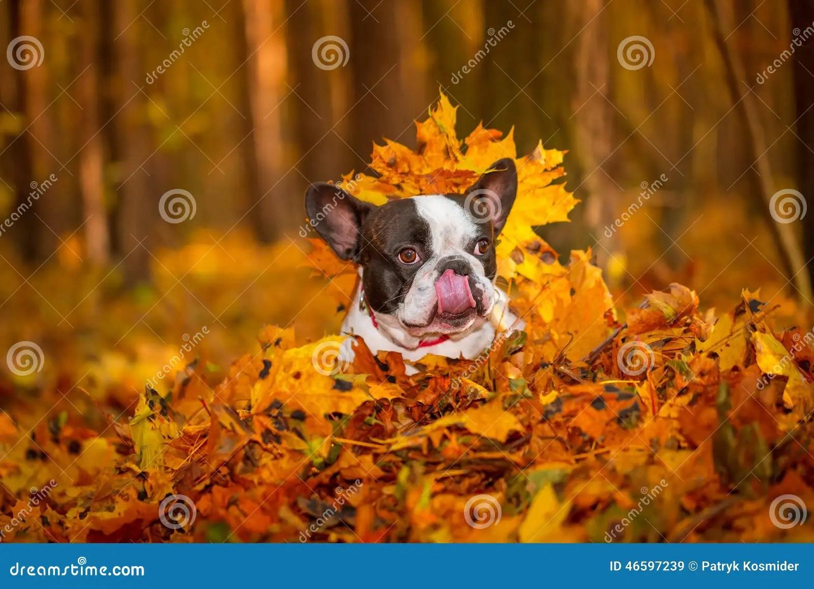 Cane Nel Paesaggio Autunnale Immagine Stock  Immagine di nazionale puntino 46597239