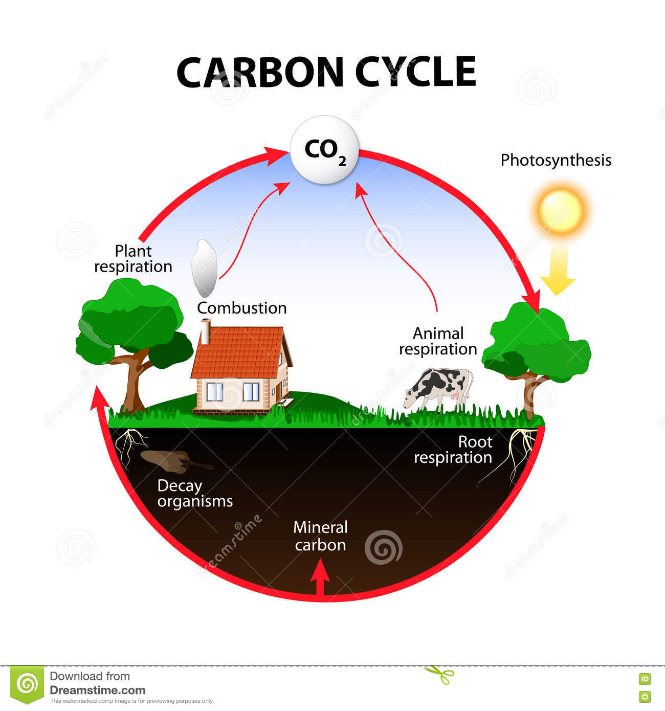 Carbon Cycle Stock Vector Illustration Of Landscape