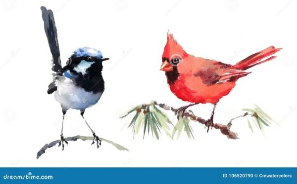 wren stock illustrations 337