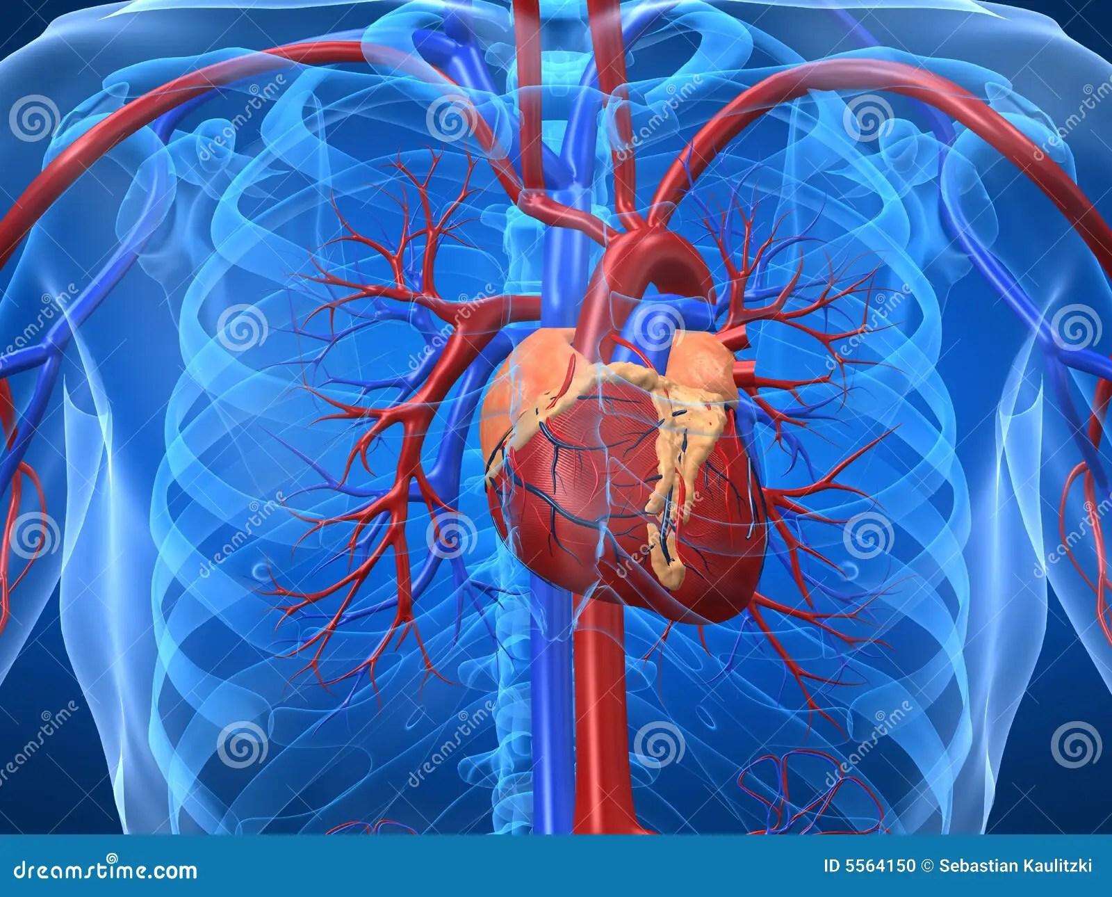 Cardiovascular Disease Diagram Cardiovascular System Stock Illustration Illustration Of
