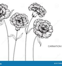 carnation flower diagram wiring diagram expert carnation flower anatomy carnation flower diagram [ 1300 x 957 Pixel ]