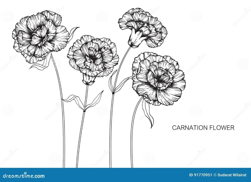 medium resolution of carnation flower diagram wiring diagram expert carnation flower anatomy carnation flower diagram