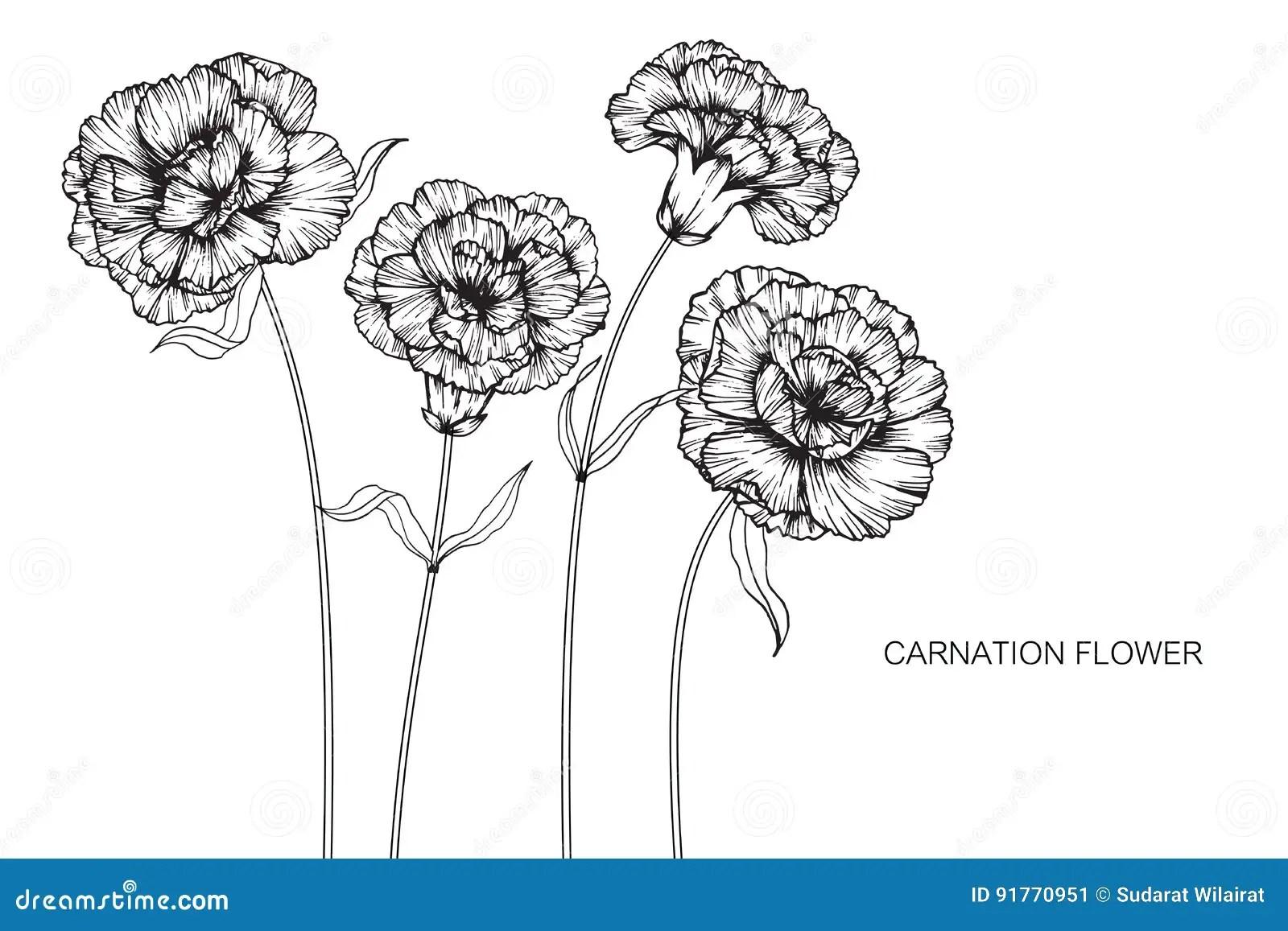 hight resolution of carnation flower diagram wiring diagram expert carnation flower anatomy carnation flower diagram