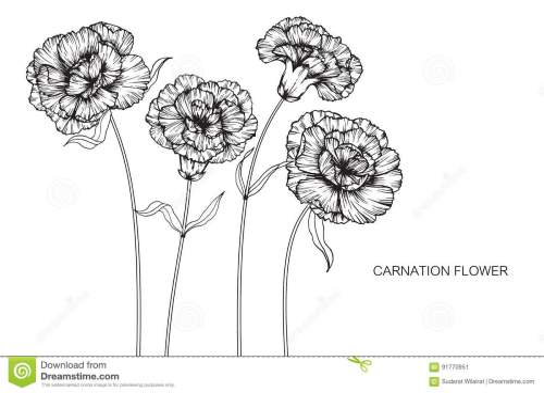 small resolution of carnation flower diagram wiring diagram expert carnation flower anatomy carnation flower diagram