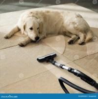 Carpet Dog Stock Photo - Image: 8494200