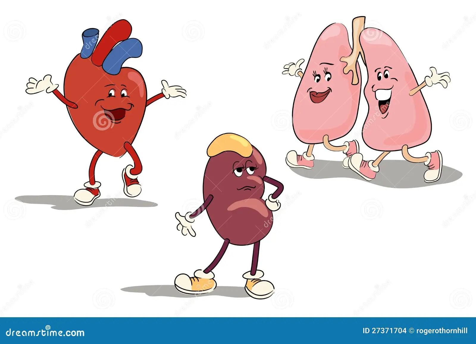 Cartoon Character Set Of Human Internal Organs Stock