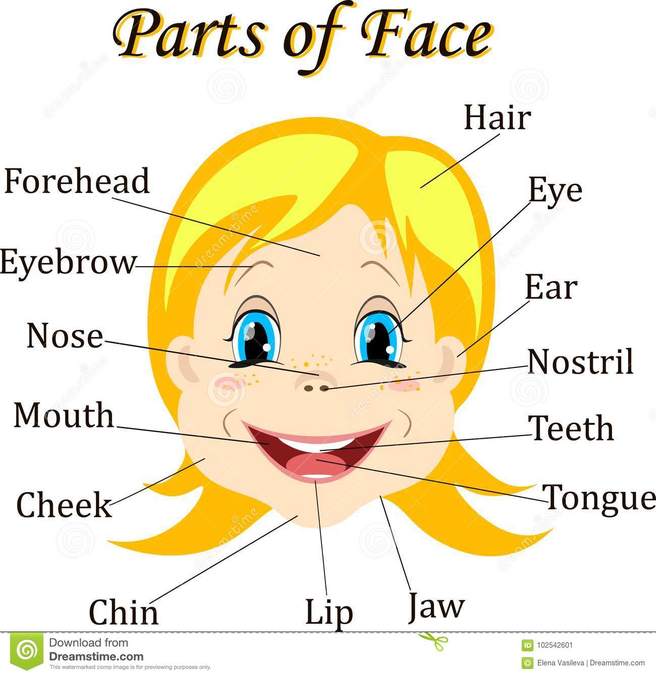Cartoon Child Girl Vocabulary Of Face Parts Vector Illustration Stock Vector