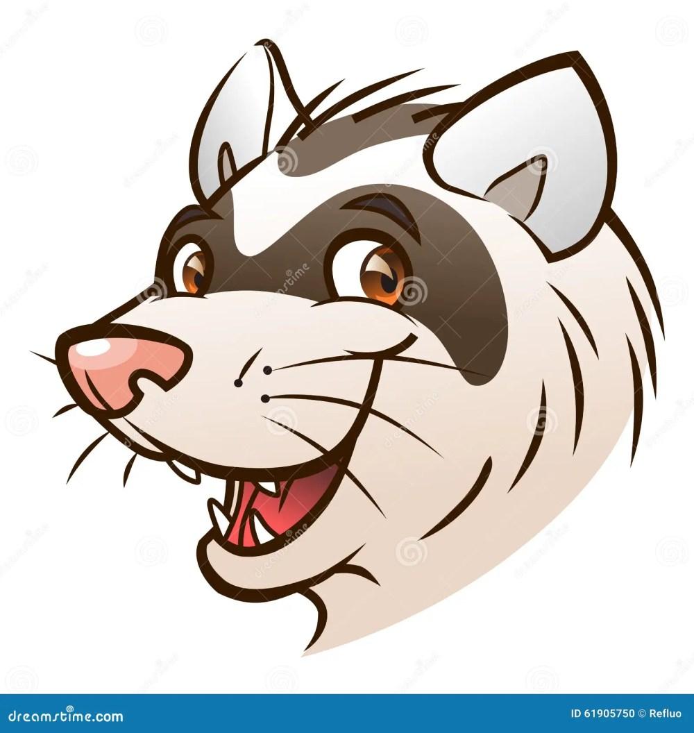 medium resolution of cartoon ferret head portrait of cartoon ferret on the white background royalty free illustration