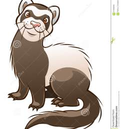 cartoon ferret stock illustrations 526 cartoon ferret stock illustrations vectors clipart dreamstime [ 1065 x 1300 Pixel ]