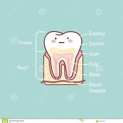 Diagram For 5 Gum Glycolysis And Krebs Cycle Of Your Teeth All Elsavadorla