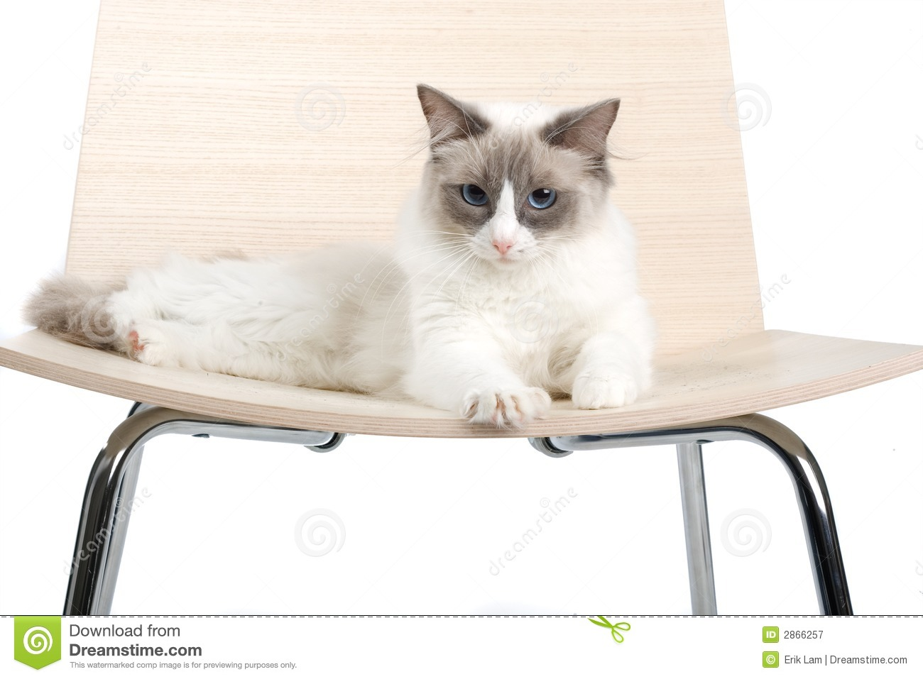 Cat On Chair Royalty Free Stock Photography  Image 2866257