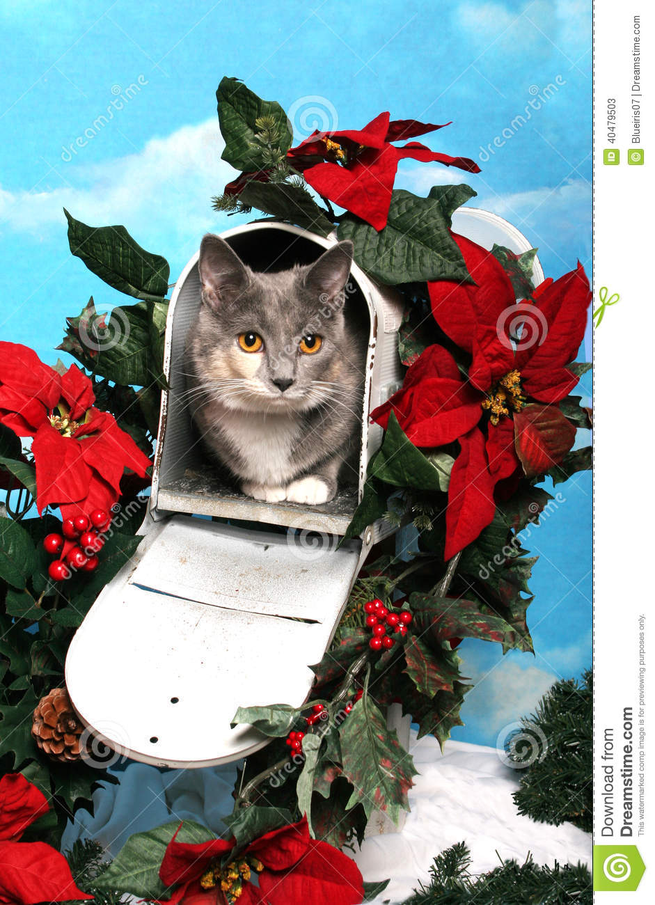 Cat In A Christmas Mailbox Stock Photo Image 40479503