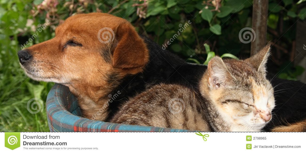Animal Rights Wallpaper Cat And Dog Stock Image Image Of Friend Portrait Soft