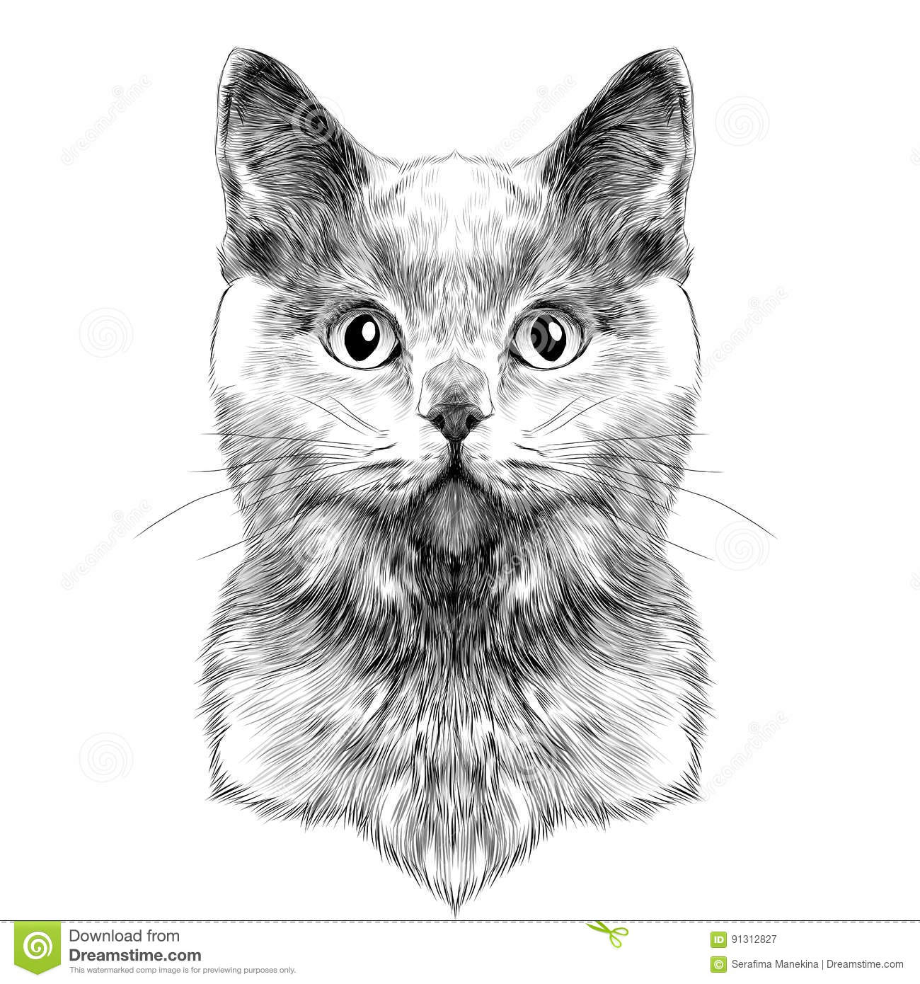 Cat Face Sketch Vector Stock Vector Illustration Of Shorthair 91312827