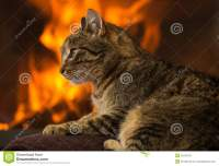 Cat In Front Of Fireplace Stock Photo - Image: 52025165