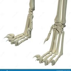 Dog Hind Leg Diagram E34 Wiring Cat Legs Anatomy Bones Stock Photo Image 53355055