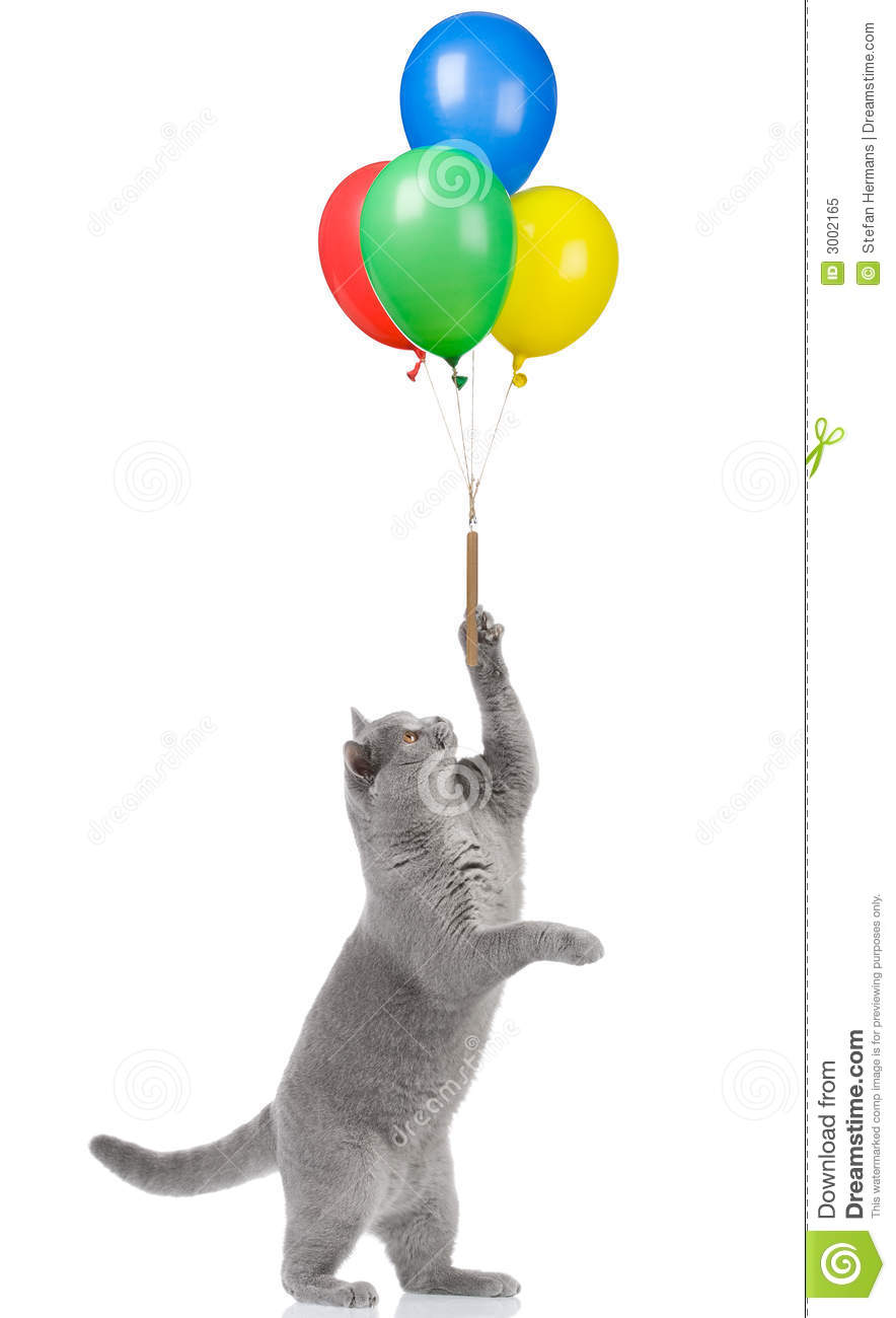 Cat Holding Balloons Royalty Free Stock Photo Image 3002165
