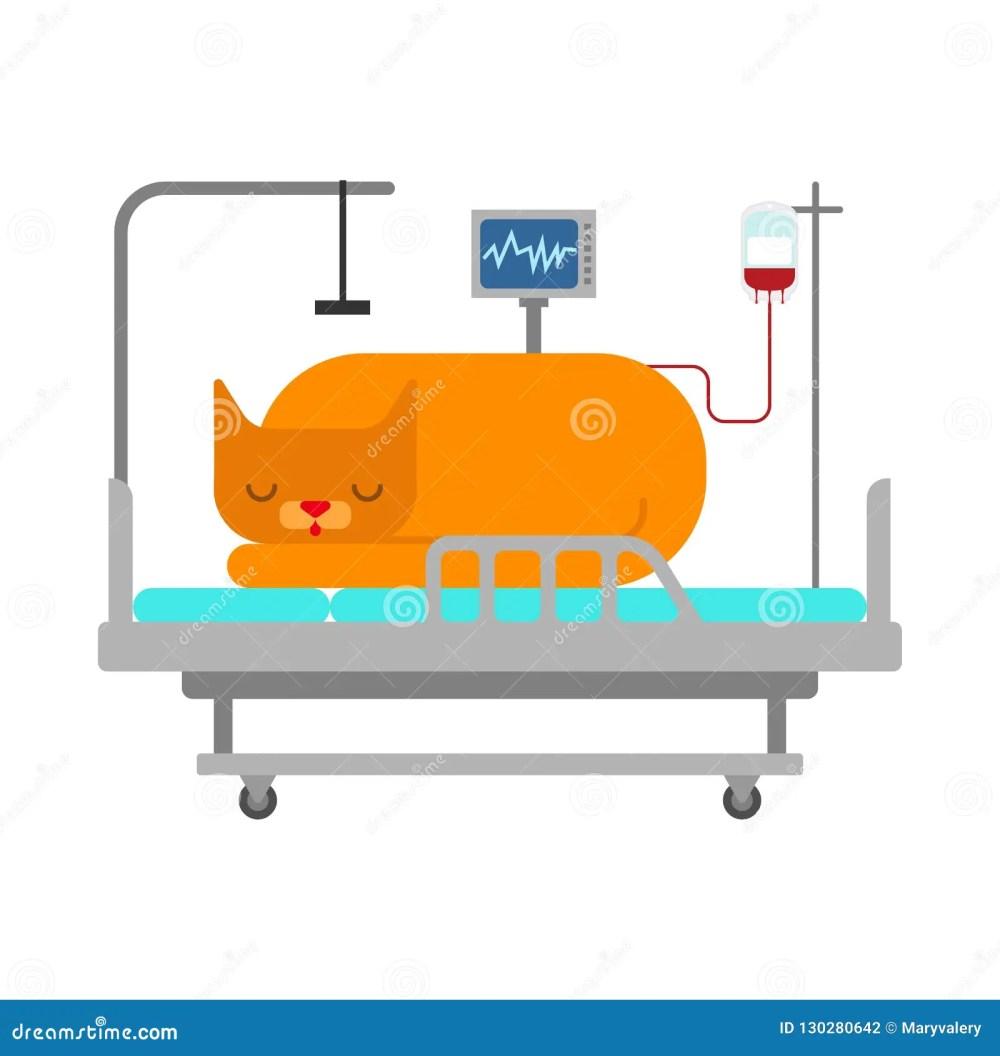 medium resolution of cat in medical bed pet is sick vector illustration