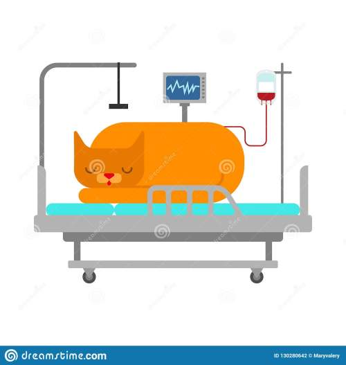 small resolution of cat in medical bed pet is sick vector illustration