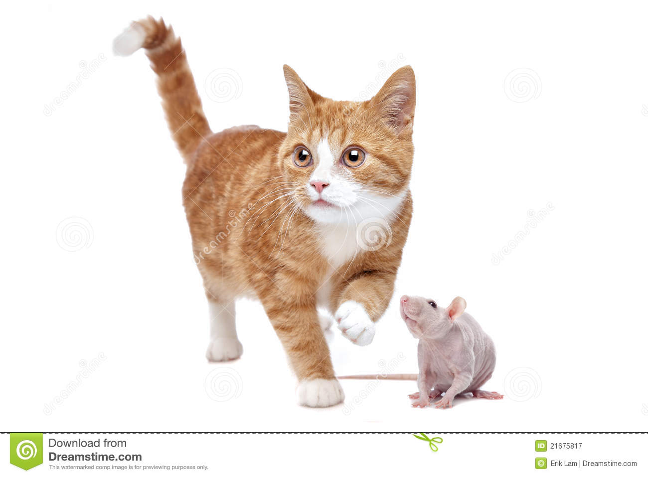 Cat And Rat Royalty Free Stock Photography  Image 21675817