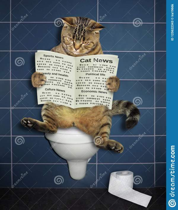 Cat Reads Toilet Stock - Of