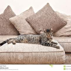 Cat Tunnel Sofa Price Turquoise Leather Sleeper On Stock Image Of Down Tabby Beige